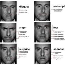ekman facial prototypes